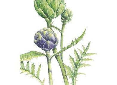 Artichoke Green Globe plus Purple Seeds