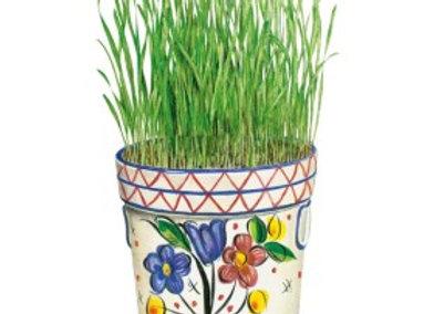 Wheatgrass Org Seeds