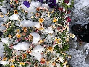 Snow and flowers.jpg