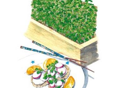 Microgreens Umami Asian Blnd Org Seeds
