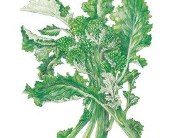 Broccoli Raab Rapini Org Seeds