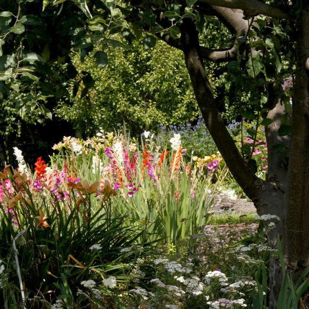 SHOP PLANT + TREE CARE