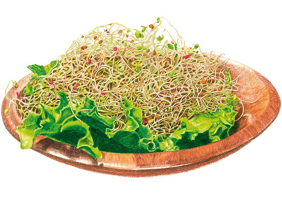 Sprouts Salad Mix Org Seeds - Lg Packet