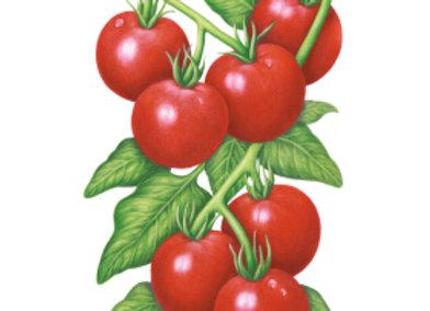 Tomato Bush Glacier Seeds