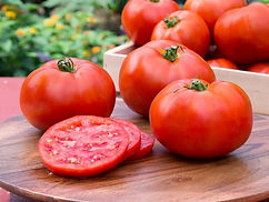 High yields of smooth skinned, large fruit earn Better Boy a spot as one of the most popular tomatoes grown in the US and as one of our all time best sellers. The fruit has excellent classic tomato flavor with just the right balance of acid and sugar. This is a great slicing tomato. It is widely adapted throughout the country. Grow it in a tall cage or tie to a stake for support.