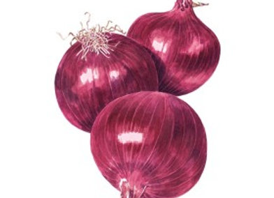 Onion Bulb (red) Cab hybrid (ID) Org Seeds
