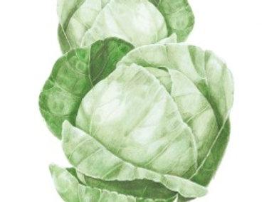 Cabbage Copenhagen Market Seeds