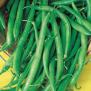 Grow a lot of beans in a smaller space. Blue Lake Pole Bean sets pods from the base to the top of the vine—so you'll have plenty for eating fresh and processing. Produces heavy yields of straight, smooth 6 in. pods that are crisp and stringless at all stages, never limp. They cook up tender, with full-bodied Blue Lake flavor. Like other pole beans, they require some type of support or trellis. For a tender texture, harvest beans when they are young and succulent. For top yields, keep picking throughout the season or the plant will stop producing. 63 DAYS.