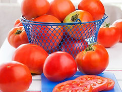 Celebrity vines bear clusters of medium-large tomatoes that are prized for their flavor. This is a great, all-round, dependable choice for your basic tomato needs - sandwiches, slicing, snacks, and bruschetta. Gardeners love that the plants are quite resistant to disease, too. The large, meaty fruit with exceptional flavor are borne on dependable, strong vines that benefit from the support of a cage or stake to keep them upright, especially when loaded with fruit. Celebrity is sometimes considered a semi-determinate tomato plant, because it grows to a certain height (3 to 4 feet) but continues to produce fruit all season until frost