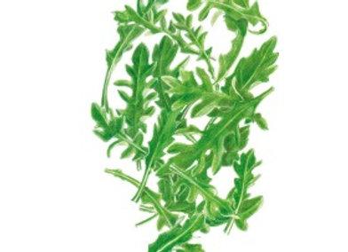 Baby Greens Arugula Org Seeds