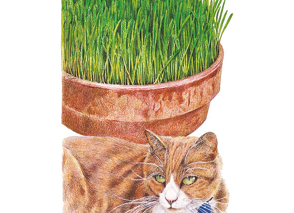 Cat Grass Mix Org Seeds - Lg Packet