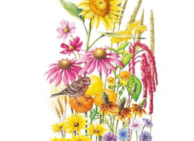 F Mix Songbird Delight Seeds - Lg Packet