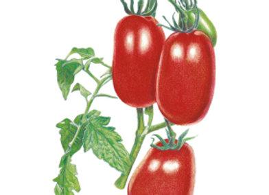 Tomato Bush Roma Italian Org Seeds
