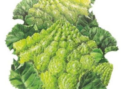Broccoli Romanesco Seeds