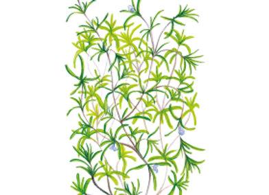 Savory Summer Seeds