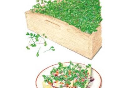 Microgreens Mellow Blend Org Seeds
