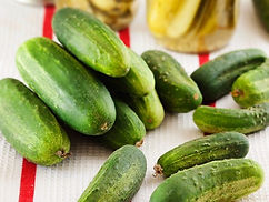 Heirloom. A favorite of gardeners for high yields of short cukes with solid flesh. Cucumbers are thin-skinned, straight with full ends, and a nice green color. Vines bear continuously. Flesh is crisp and very receptive to pickling spices. Great for any pickling recipe, whether sweets or dills. May be harvested at sizes from 3 to 7 inches, depending on your pickling needs.