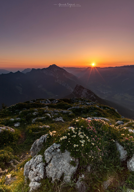 Sunrise Charmant Som, Chartreuse