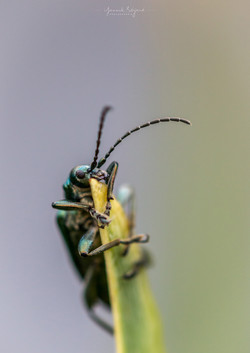 L'ascension, Chartreuse