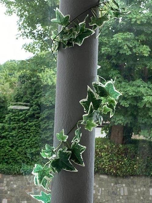 Variegated Ivy garland 183cm