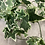 Thumbnail: Variegated Ivy garland 183cm