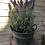 Thumbnail: Lavender plant in pot, 43cm, artificial flowers