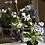 Thumbnail: Viola in pot - faux flowers