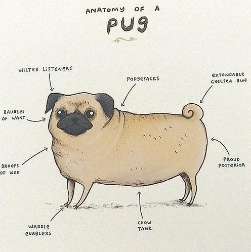 Blank anatomy of a pug greeting card