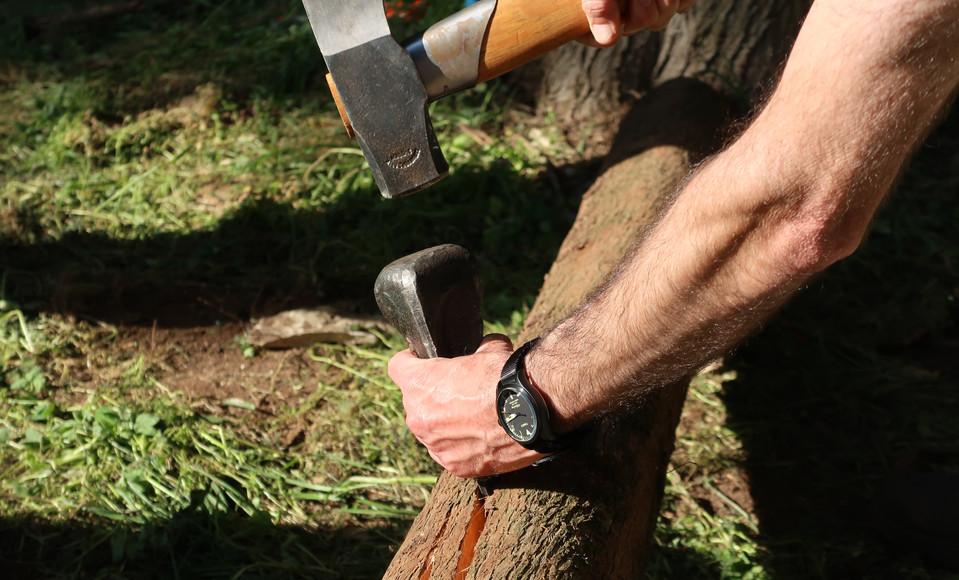 ביקוע בול עץ לפצלים שיהפכו לקשתות