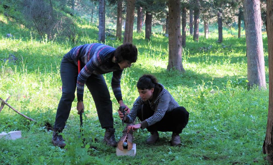 ביקוע בול עץ