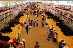 Expo Ganadera de Tlaquepaque