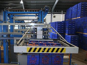 Almacén naranjas Tamarit Export