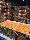 Naranjas Henry by Grupo Tamarit. Oranges Henry by Grupo Tamarit