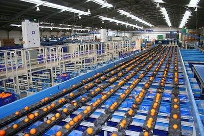 Almacén de naranjas Tamarit Export