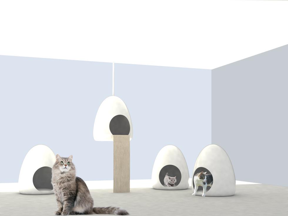 cat eggs.jpg