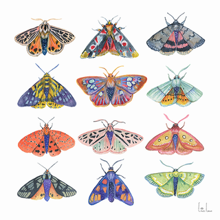 Cosmic moths