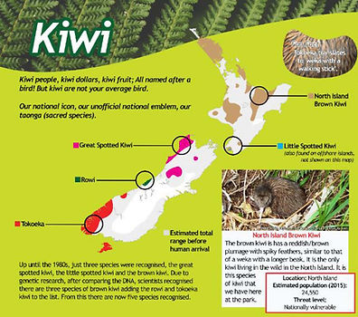 Kiwi Photo 3.jpg