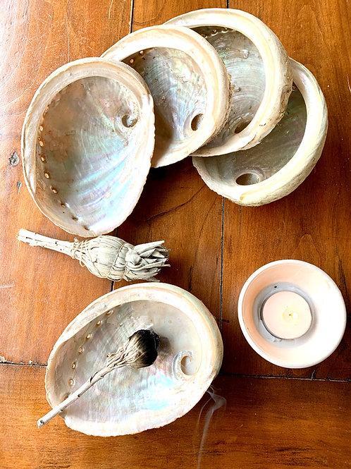 White Abalone Shell