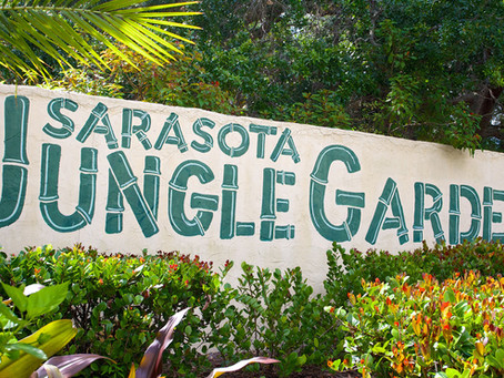 Jungle Gardens | Sarasota, FL