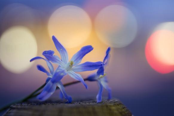 Blomster Bokeh