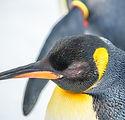 zoo_penguin_animal_bird_animal_world_wat