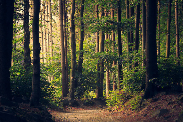 The How and Why of Forest Bathing