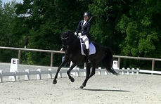écurie dressage cheval Loir et Cher pension cheval coaching