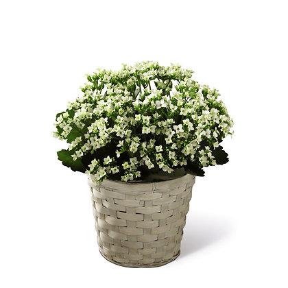 Planta en verde