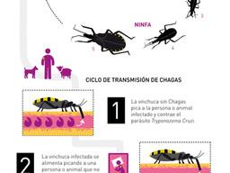 Mapa nacional de riesgo de Chagas: cruzan datos de celulares para identificar infectados
