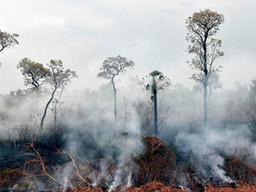 Incendios en Amazonia traerán consecuencias a distancia
