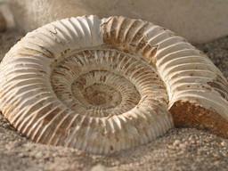 Cazadores de fósiles