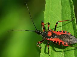 Comienza a desarrollarse un novedoso mapa de Chagas en Argentina