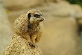 zoo-89927_1280.jpg
