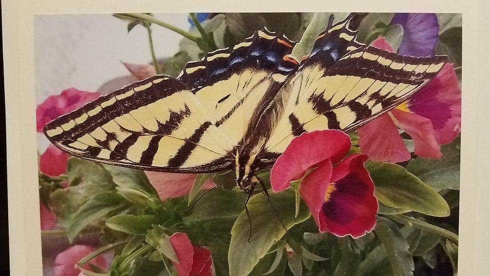 Butterfly Fancy
